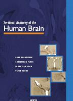Sectional anatomy of the human brain